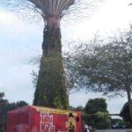 waralaba-makanan-tahu-mafia-di-garden-by-the-bay-singapore